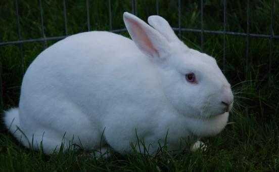 Как сделать клизму кролику