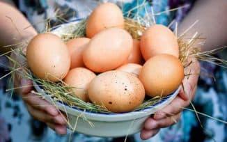 яйца и кура