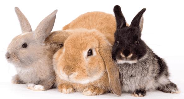Болезни декоративных кроликов симптомы и их лечение фото