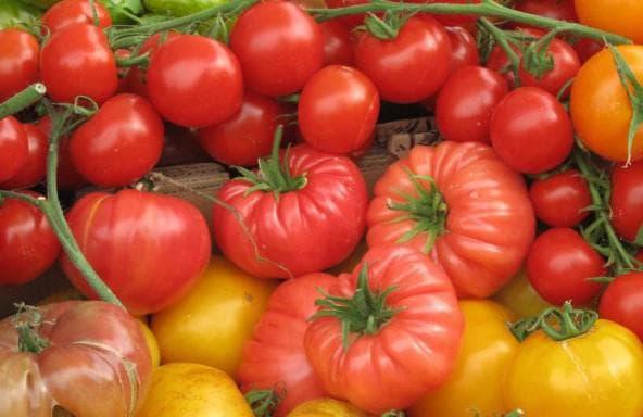Детерминантные сорта помидоров для открытого грунта