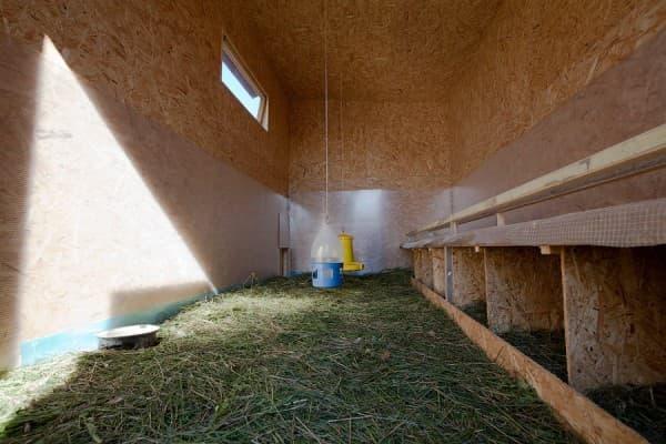 гнездо в индюшатнике