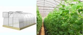 теплица для выращивания огурцов круглый год