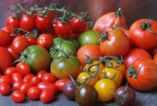 Сорта среднерослых томатов для открытого грунта