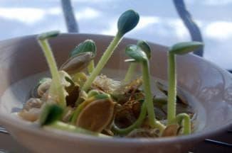 посадка семян тыквы