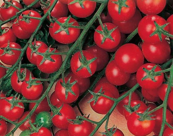 помидор Сладкая гроздь