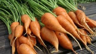 сорта длительного хранения моркови