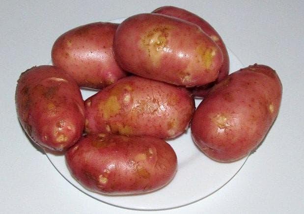 картофель вишенка