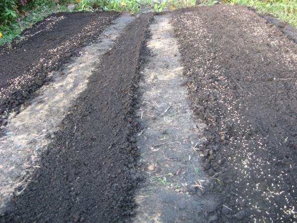 подготовка почвы к посадке кабачков