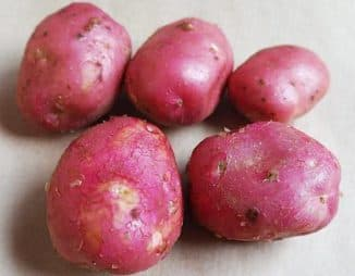 картошка на огороде