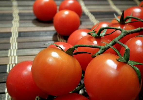 помидоры дружок
