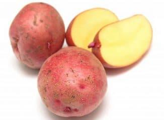 картошка сладкой породы