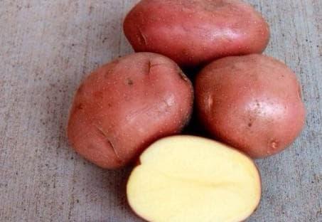 Беллароза-картофель