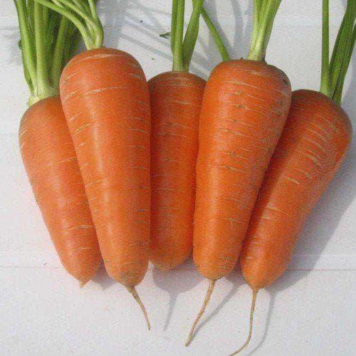 морковь Алёнка