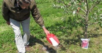 мочевина в огороде