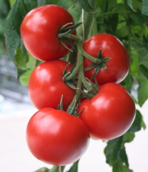 помидоры верлиоко