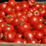 выращивание высокорослых помидоров +в открытом грунте