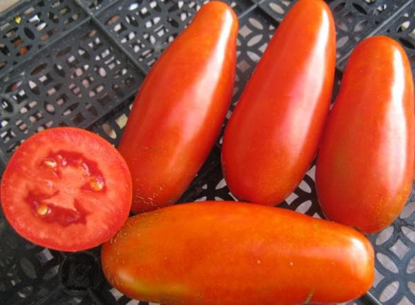 помидоры сорта Сибиряк