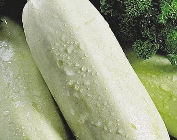 кабачки сорта белый