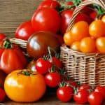 Низкорослые томаты для открытого грунта и теплиц, не требующие пасынкования