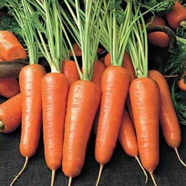 морковь Геранда