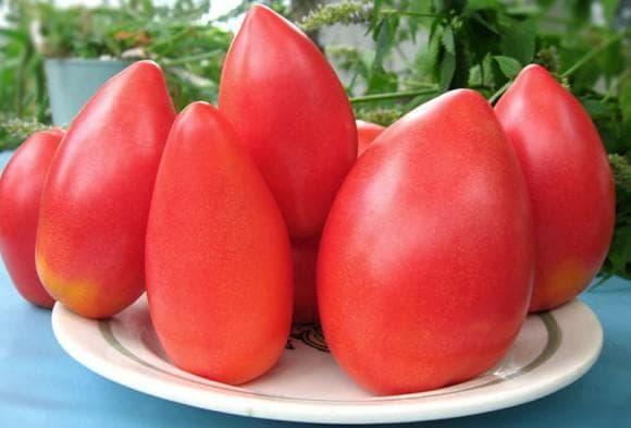 помидоры сорта Супермодель