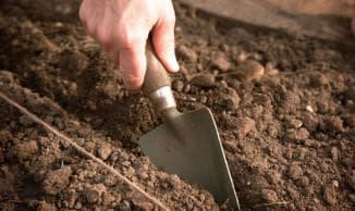 подготовка почвы для клубники