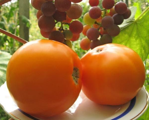 томат Трапеза