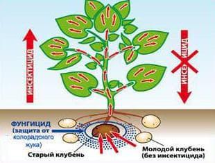 средство от вредителей картофеля