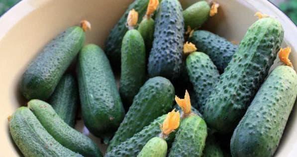 Семена огурцов партенокарпические самые урожайные