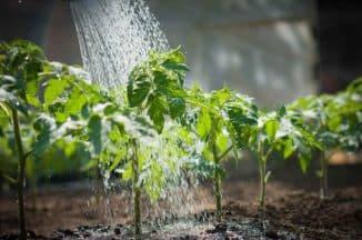 разные виды растений в теплице