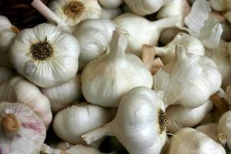озимый чеснок и его выращивания