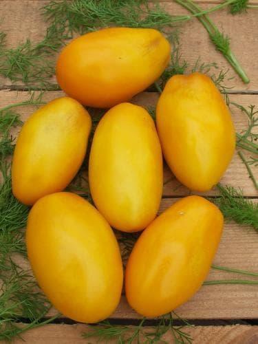 помидор сорта Желтый буян