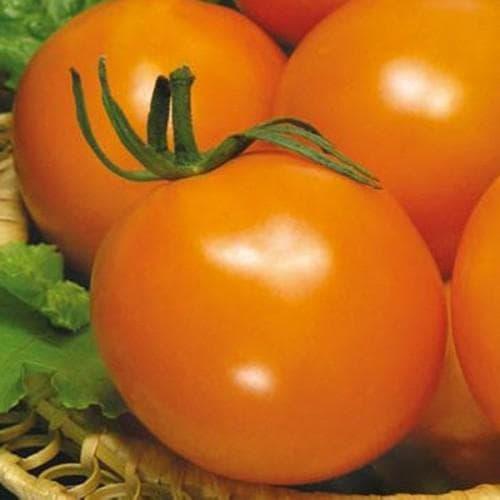 помидор сорта Оранжевый Де-Барао