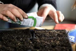 подготовка семян для высадки