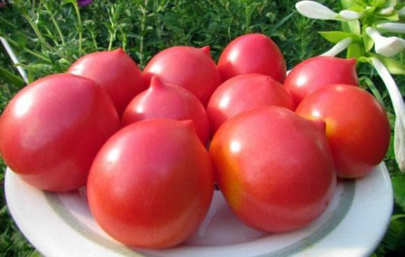 помидоры Ниагара F1
