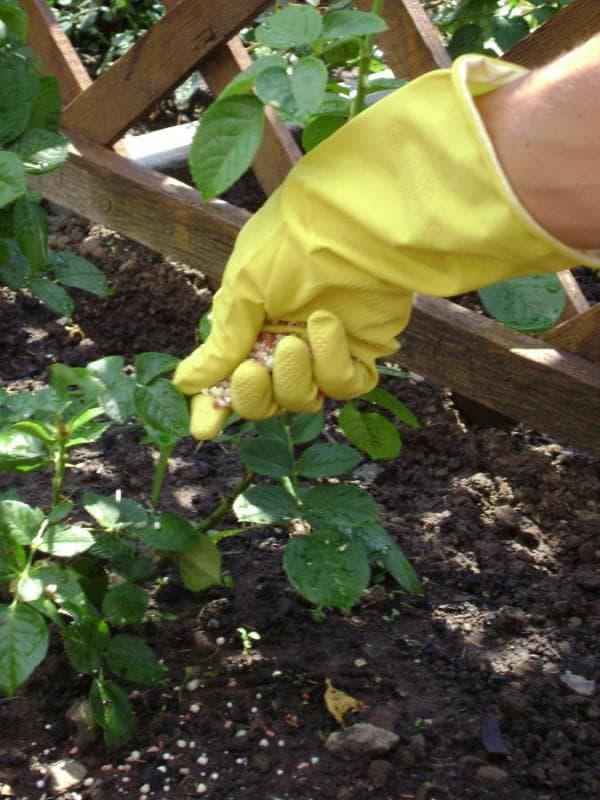 подкормка растения фасоли