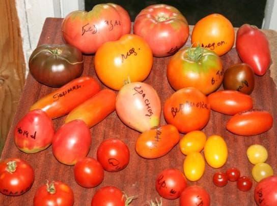 Сорта томатов для краснодарского края описание фото