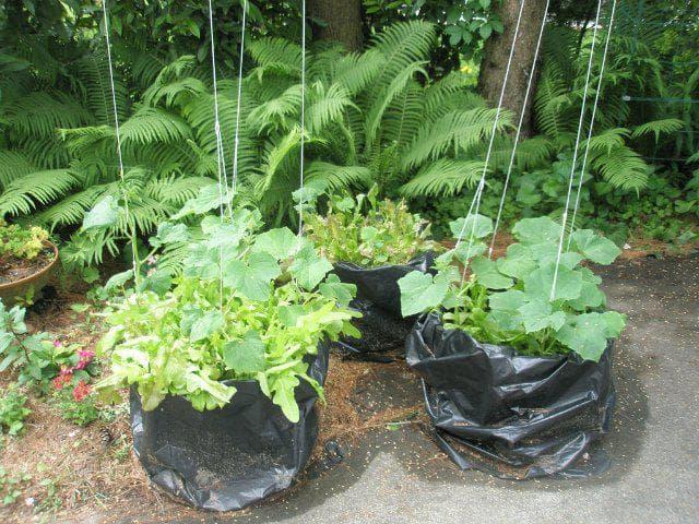 Как организовать выращивание огурцов в мешках