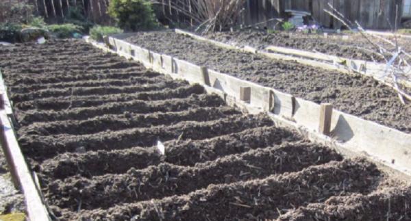 Выращивание лука по китайской технологии посадка и уход видео