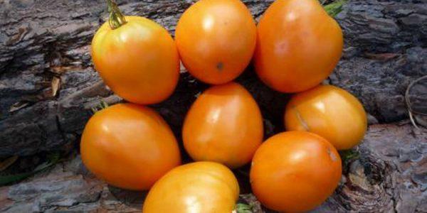 Скороспелые сорта томатов для открытого грунта: низкорослые, среднерослые