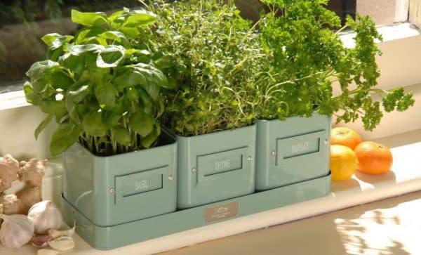 шпинат с другой зеленью на подоконнике