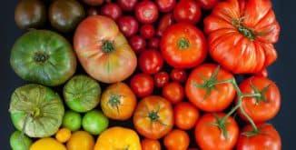 разные виды растений томатов