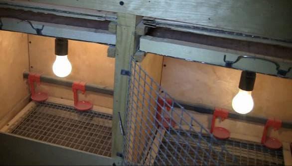 Как правильно обустроить клетки для цыплят-бройлеров