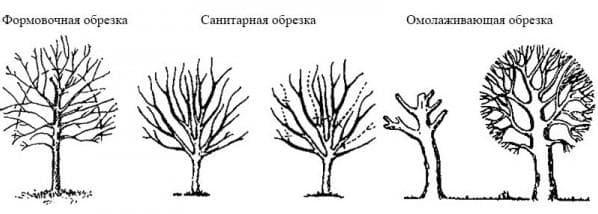 санитарная обрезка деревьев