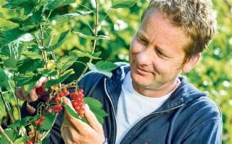 полив красной смородины