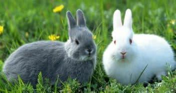 кролики и комбикорм для кормления
