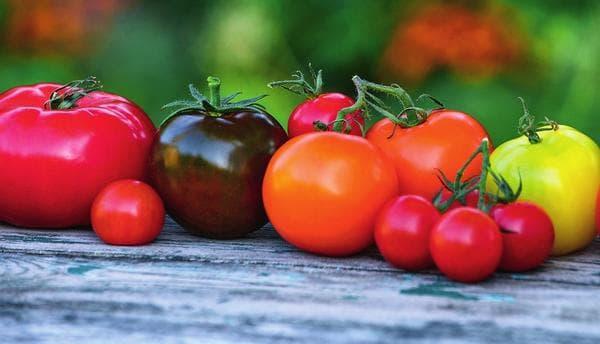 Лучшие сорта томатов для Подмосковья для теплиц с фото