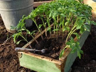 тёплое помещение для томатов