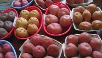 разные картофель
