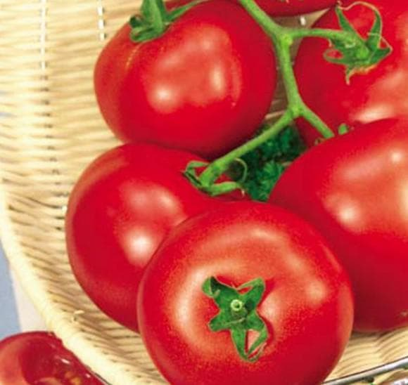 томаты Волгоградец